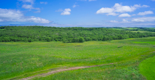 北海道 自然 風景 パノラマ 牧草地と青空の写真素材 [FYI03407199]