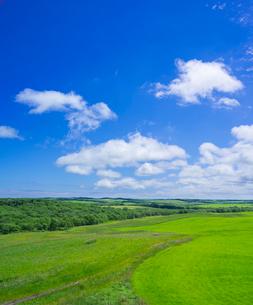 北海道 自然 風景 牧草地と青空の写真素材 [FYI03407201]