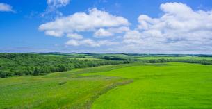 北海道 自然 風景 パノラマ 牧草地と青空の写真素材 [FYI03407202]