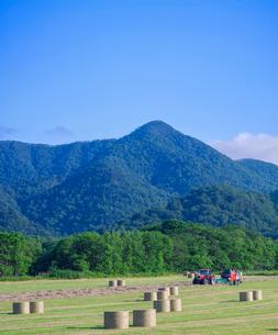 北海道 自然 風景 牧草地の写真素材 [FYI03407214]