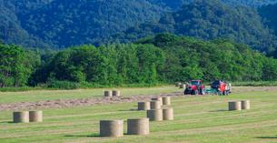 北海道 自然 風景 パノラマ 牧草地の写真素材 [FYI03407217]
