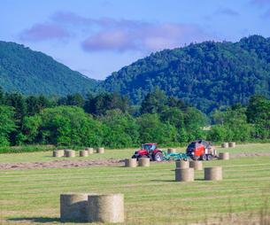 北海道 自然 風景 牧草地の写真素材 [FYI03407219]