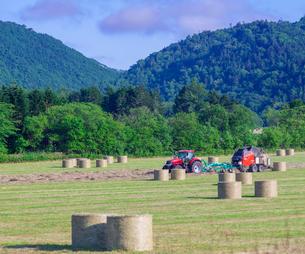 北海道 自然 風景 牧草地の写真素材 [FYI03407225]