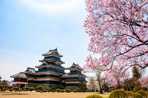 松本城と満開の桜の写真素材 [FYI03407277]