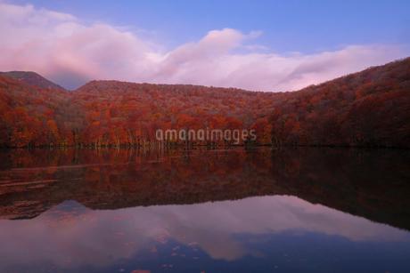 蔦沼(つたぬま) 日本 青森県 十和田市の写真素材 [FYI03407414]