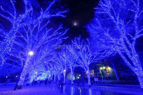 代々木公園 日本 東京都 渋谷区の写真素材 [FYI03407437]
