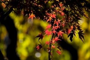 上田城址公園 日本 長野県 上田市の写真素材 [FYI03407493]