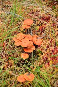 エストニア・北部のラヘマー国立公園の中のキノコの写真素材 [FYI03407735]