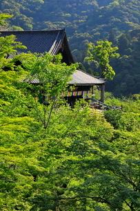 5月 新緑の長谷寺本堂の写真素材 [FYI03407894]
