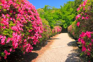 5月 ツツジの長岳寺 の写真素材 [FYI03407906]