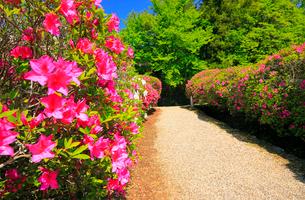 5月 ツツジの長岳寺 の写真素材 [FYI03407907]