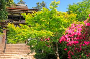 5月 ツツジと新緑の長岳寺 の写真素材 [FYI03407908]