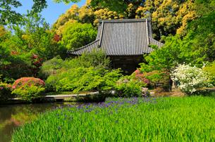 5月 ツツジと新緑の長岳寺本堂 の写真素材 [FYI03407913]