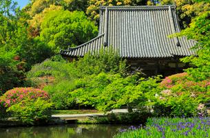 5月 ツツジの長岳寺本堂の写真素材 [FYI03407914]