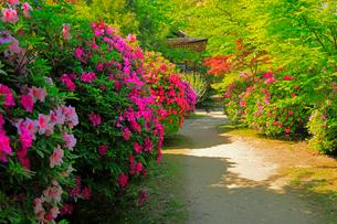 5月 ツツジの長岳寺 の写真素材 [FYI03407915]