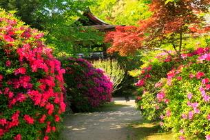5月 ツツジの長岳寺 の写真素材 [FYI03407916]