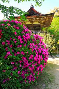 5月 ツツジの長岳寺 の写真素材 [FYI03407917]