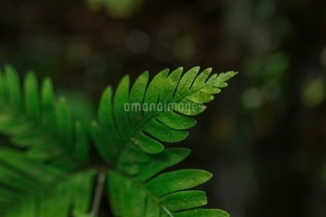 色鮮やかな緑の葉。の写真素材 [FYI03407952]