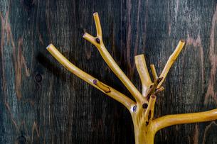 木の枝のオブジェの写真素材 [FYI03408083]