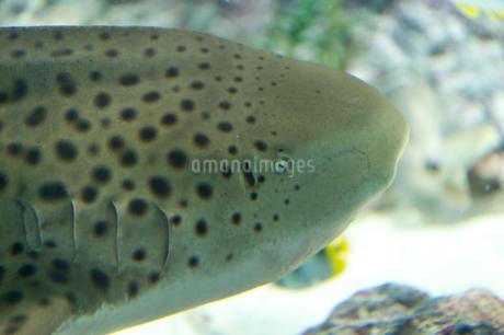 サメの写真素材 [FYI03408185]