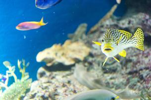 熱帯魚の写真素材 [FYI03408186]