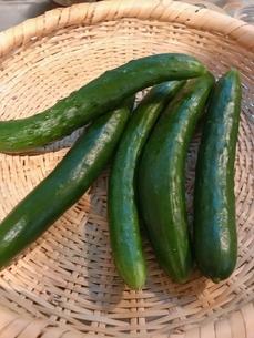 夏野菜の写真素材 [FYI03408206]