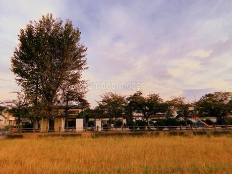 夕方の公園の写真素材 [FYI03408221]