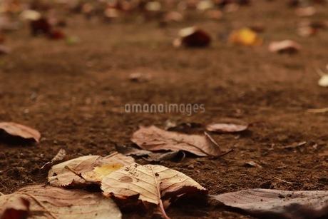 秋の写真素材 [FYI03408229]