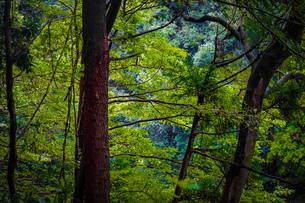 大和市泉の森公園の森林のイメージの写真素材 [FYI03408373]