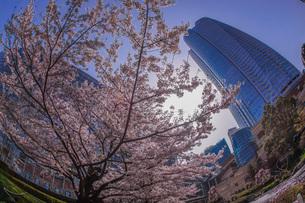 満開の桜と六本木ヒルズの写真素材 [FYI03408495]