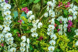 南国のジャングルの植物群の写真素材 [FYI03408514]