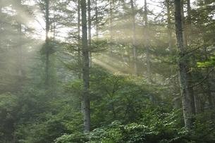 朝日の斜光線の写真素材 [FYI03408531]