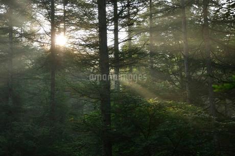 朝日の斜光線の写真素材 [FYI03408535]