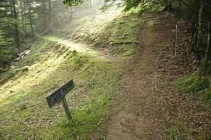 滝子山の登山道の写真素材 [FYI03408553]
