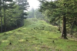 夏の滝子山尾根道の写真素材 [FYI03408557]