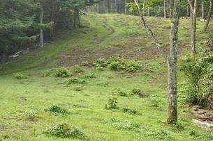 夏の滝子山尾根道の写真素材 [FYI03408570]