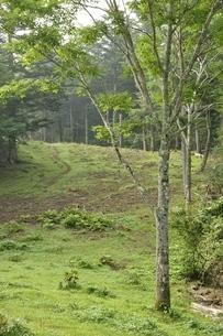 夏の滝子山尾根道の写真素材 [FYI03408571]