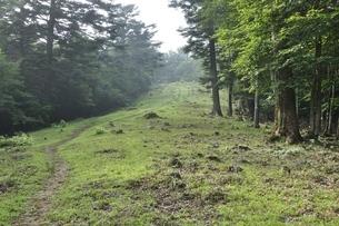滝子山 防火帯の尾根道の写真素材 [FYI03408595]