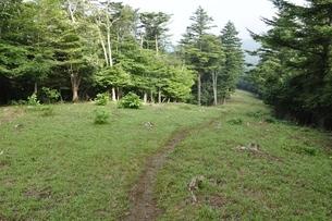 滝子山 防火帯の尾根道の写真素材 [FYI03408596]