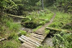 森を流れる清水と山道の写真素材 [FYI03408617]