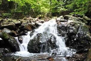 滝子山 夏のズミ沢の写真素材 [FYI03408636]
