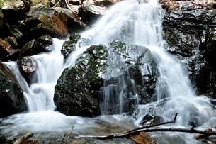 滝子山 夏のズミ沢の写真素材 [FYI03408637]