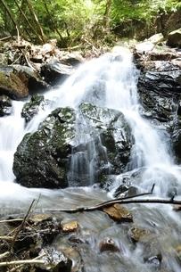 滝子山 夏のズミ沢の写真素材 [FYI03408639]