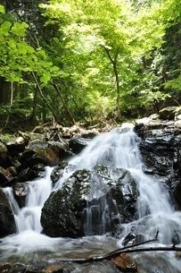 滝子山 夏のズミ沢の写真素材 [FYI03408641]