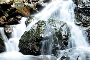 滝子山 夏のズミ沢の写真素材 [FYI03408643]