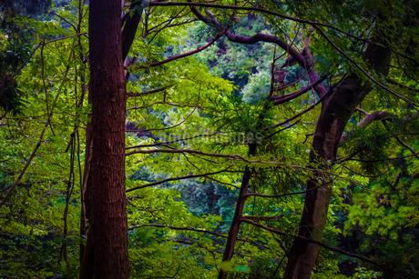 大和市泉の森公園の森林のイメージの写真素材 [FYI03408672]