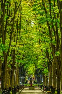 仙台定禅寺通りの新緑の写真素材 [FYI03408698]
