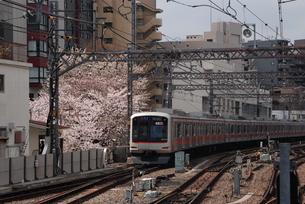 東横線と桜の写真素材 [FYI03408752]