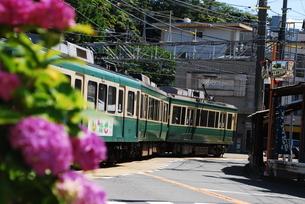 鎌倉 江ノ電 紫陽花の写真素材 [FYI03408760]