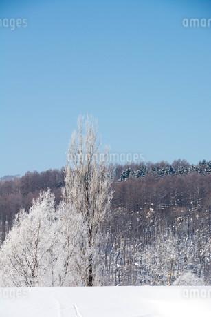 冬の寒い朝の写真素材 [FYI03408791]